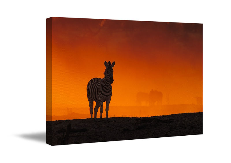 A canvas art print as wall art. A Photographic print of a wildlife photo on canvas.