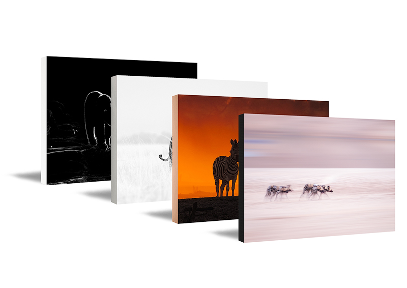 Four fine art panels with wildlife photo prints as display in a row