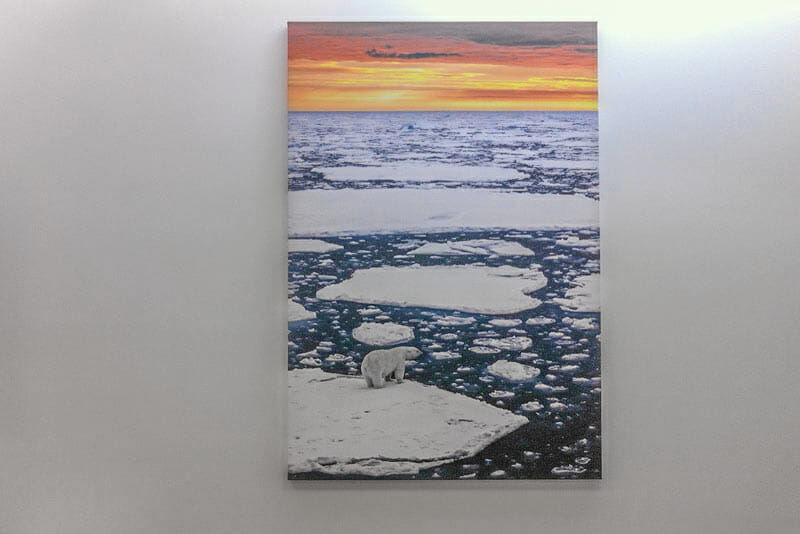 Polar bear on sea ice large photo print hanging on the wall in a home of a client