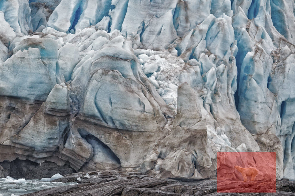 Polar bear stands in front of glacier. Red box marks the bear. Showing the environment in wildlife photography