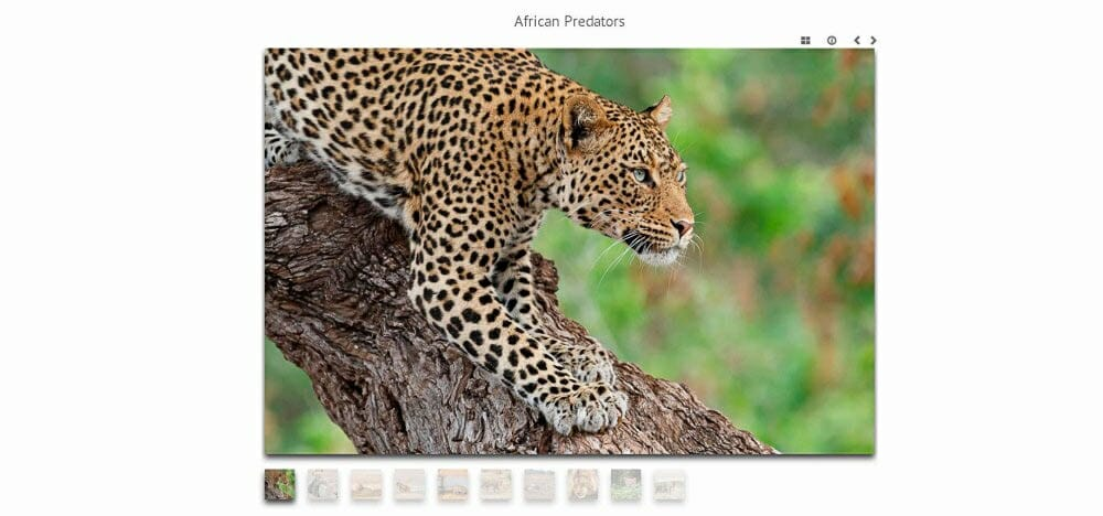 Portfolio Screenshot WordPress Photoshelter, gallery photo of leopard with thumbnails underneath the large photograph
