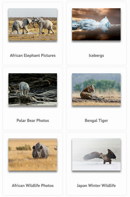 mobile view, screen photo of WordPress Website PhotoShelter Integration
