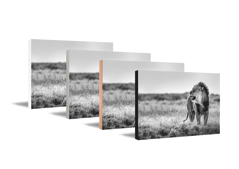 Wall art panels showing a lion in black and white. Fine art photography