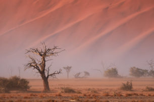 A  landscape photograph shows a tree standing in front of a red dune in a sandstorm. (copyright Anette Mossbacher)