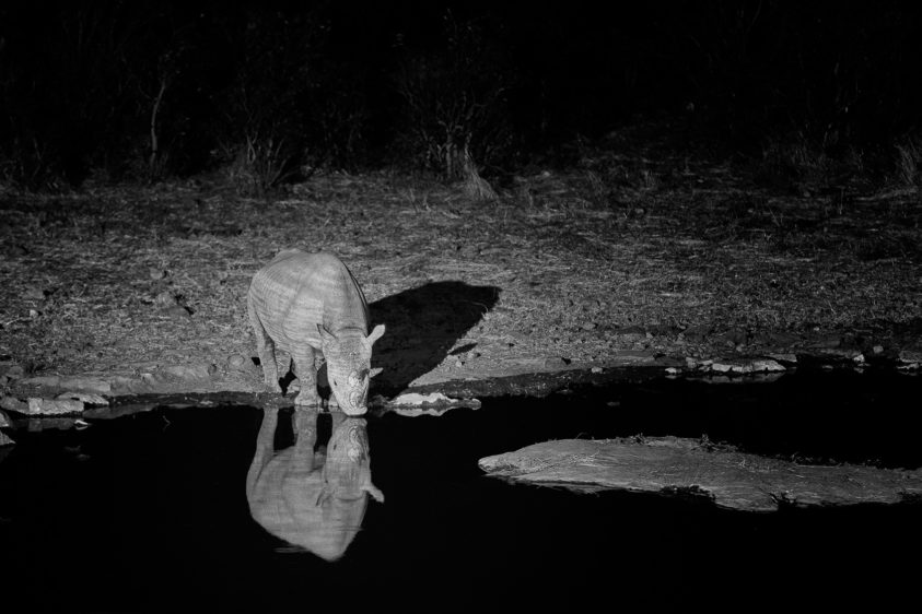 That elusive Black rhino is drinking at the waterhole at night, its reflection is in the water. (copyright Anette Mossbacher)