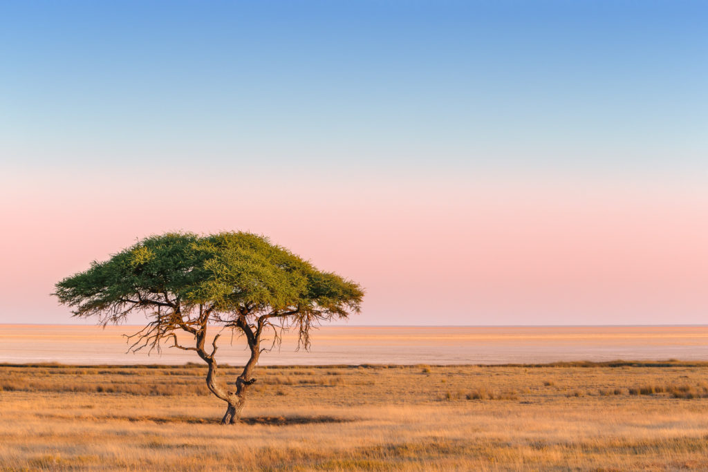 A photograph of an African Savannah landscape that features a solitary acacia tree in this grassland. (copyright Anette Mossbacher)