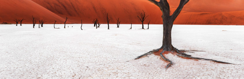 A beautiful landscape photograph shows the black Acacia trees on Deadvlei clay pan with red dunes. (copyright Anette Mossbacher)