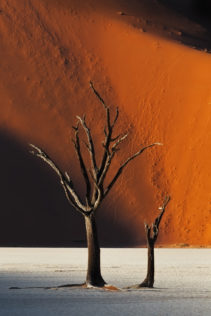 A fine art photograph in color shows two dead trees on the famous Deadvlei clay pan with red dunes. (copyright Anette Mossbacher)